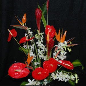 Custom Tropical Flower Orders