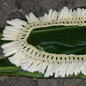 Fresh white ginger lei aloha hawaiian flowers fresh white ginger lei mightylinksfo